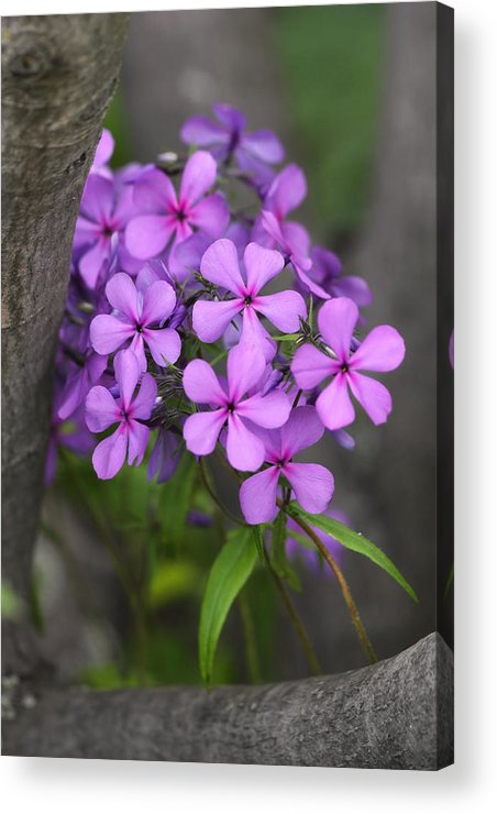 Flowers Acrylic Print featuring the photograph Natural Bouquet by Theo OConnor