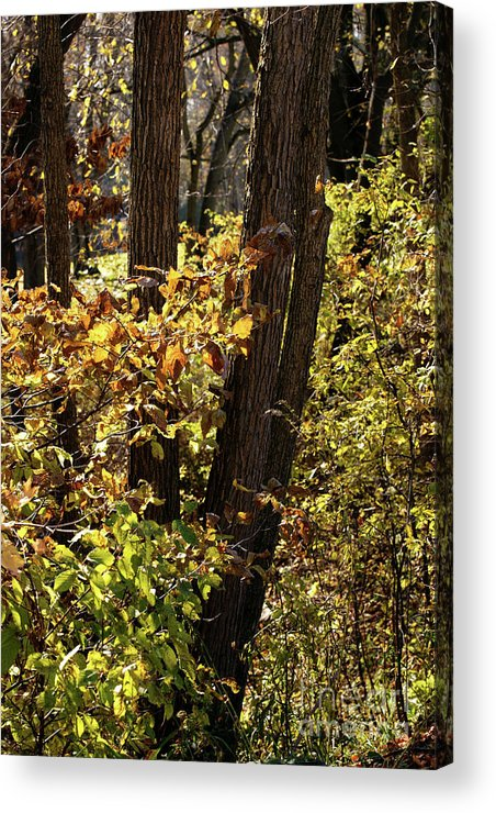 Woods Acrylic Print featuring the photograph A Walk Through The Woods - 1 by Linda Shafer
