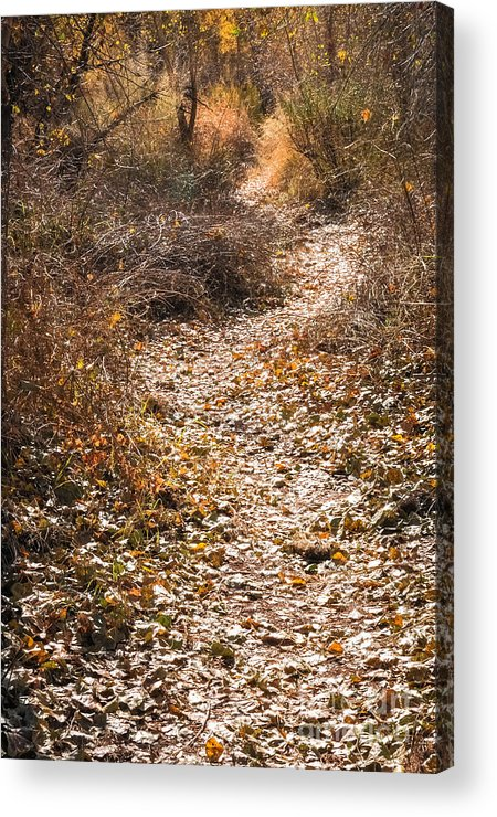 Paths Acrylic Print featuring the photograph All That Glitters... by Al Andersen
