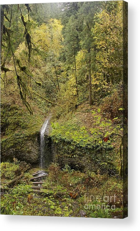Photography Acrylic Print featuring the photograph Autumn by Sean Griffin