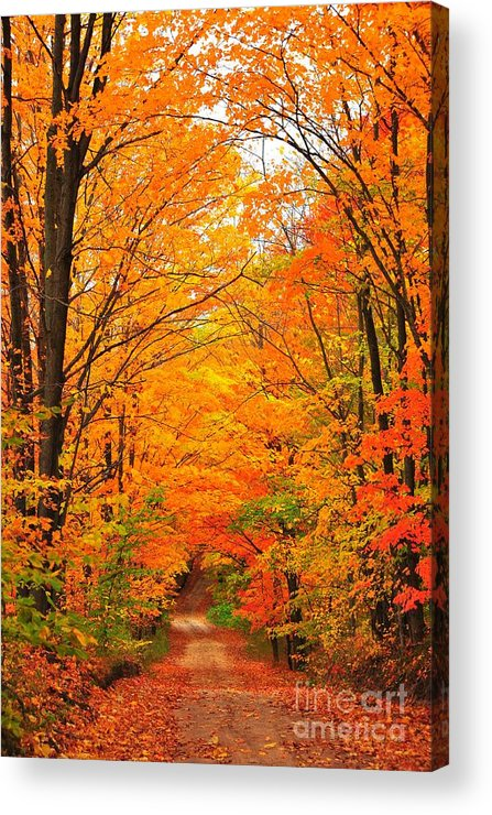 Autumn Acrylic Print featuring the photograph Autumn Tunnel Of Trees by Terri Gostola
