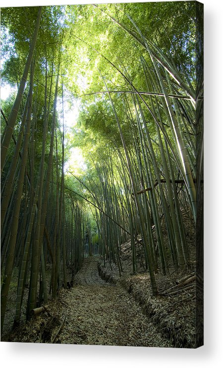 Bamboo Acrylic Print featuring the photograph Bamboo Road by Aaron Bedell