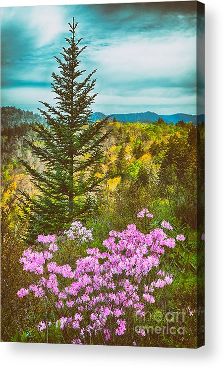 North Carolina Acrylic Print featuring the painting Beauty In The Forest II by Dan Carmichael