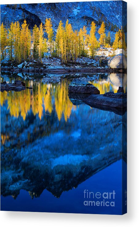 Alpine Lakes Wilderness Acrylic Print featuring the photograph Blue And Yellow by Inge Johnsson