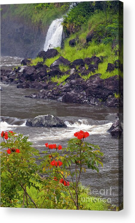 Boiling Pots State Park Big Island Hawaii Parks Wailuka River Rivers Water Falls Waterfall Waterfalls Tree Trees Plants Plants Flower Flowers Landscape Landscapes Waterscape Waterscapes Acrylic Print featuring the photograph Boiling Pots State Park by Bob Phillips