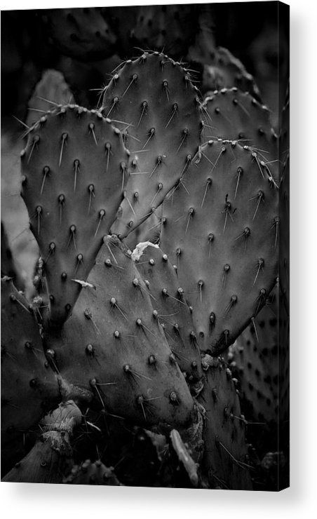 Botanicals Acrylic Print featuring the photograph Cactus 5264 by Timothy Bischoff