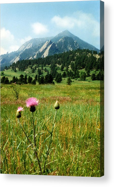 Chautauqua Acrylic Print featuring the photograph Chautauqua Wildflowers Boulder by Marilyn Hunt