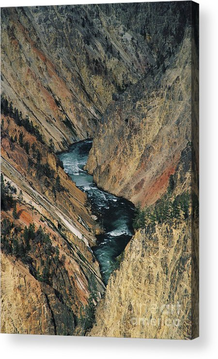Yellowstone Acrylic Print featuring the photograph Canyon Jewel by Kathy McClure