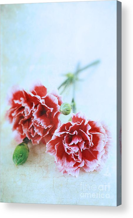 Colour Acrylic Print featuring the photograph Carnations by Stephanie Frey