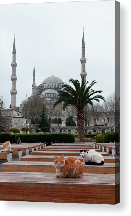 Animal Acrylic Print featuring the photograph Cats Sitting On Outdoor Seats by Thomas Pickard