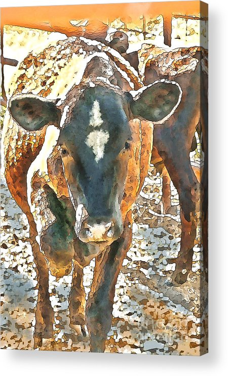 Cow Art Acrylic Print featuring the photograph Cattle Round Up by Artist and Photographer Laura Wrede