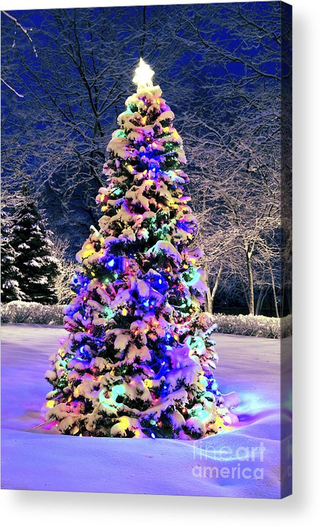 Christmas Acrylic Print featuring the photograph Christmas Tree In Snow by Elena Elisseeva