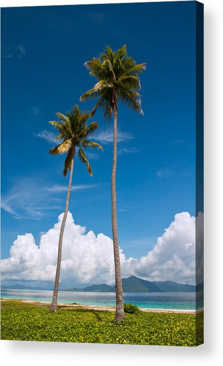 Coconut Acrylic Print featuring the photograph Coconut Trees by Kim Pin Tan