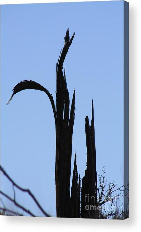 Crane Acrylic Print featuring the photograph Crane Wood by Brandi Maher