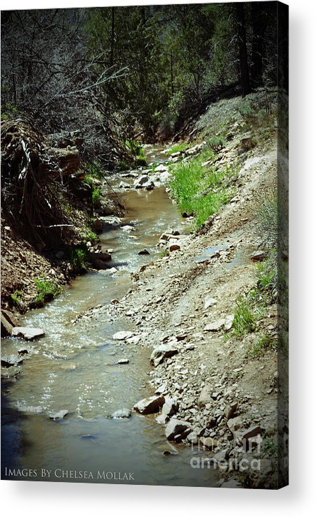 Creek Acrylic Print featuring the photograph Creek by Chelsea Mollak