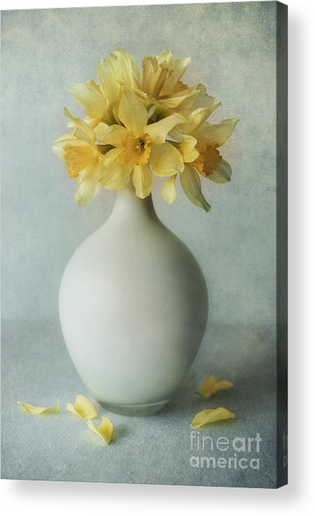 Flowers Acrylic Print featuring the photograph Daffodils In A White Flowerpot by Jaroslaw Blaminsky