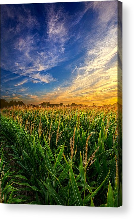 Corn Acrylic Print featuring the photograph Dancing In The Rows by Phil Koch