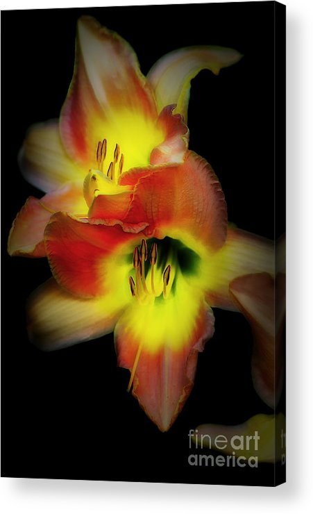 Day Lily Acrylic Print featuring the photograph Day Lily On Black by Mike Nellums