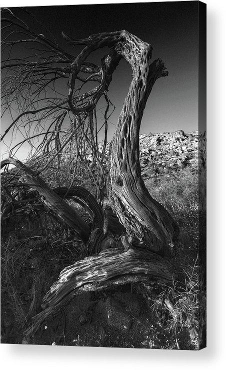 Acrylic Print featuring the photograph Desert Elder by Stephen Dennstedt