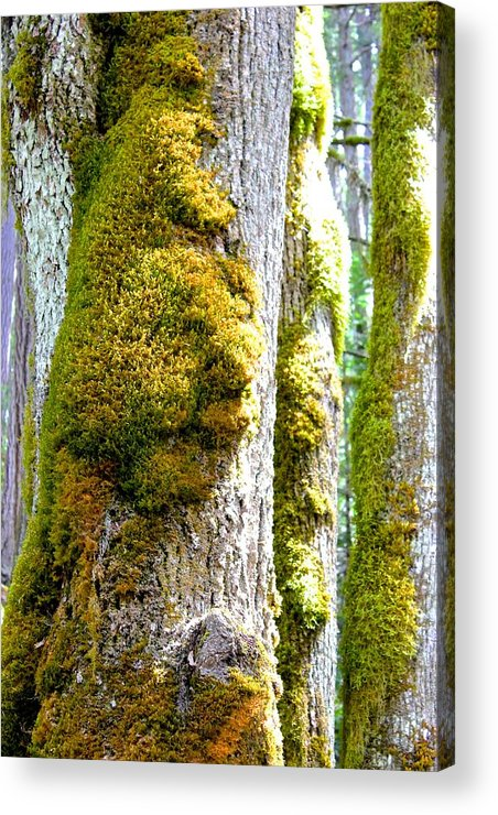 Face In The Moss Acrylic Print featuring the photograph Face In The Moss by Brian Sereda