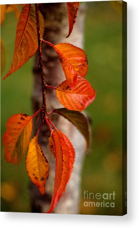 Fall Acrylic Print featuring the photograph Fall Beauty by Sharon Elliott