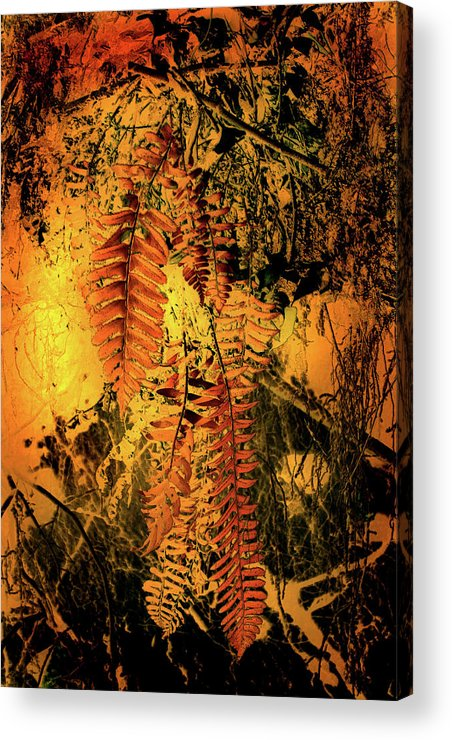 Ferns Acrylic Print featuring the photograph Ferns In Fall by Nina Fosdick
