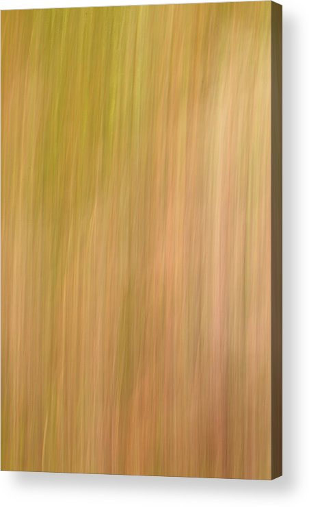 Abstract Acrylic Print featuring the photograph Field Of Grass by Steve DaPonte