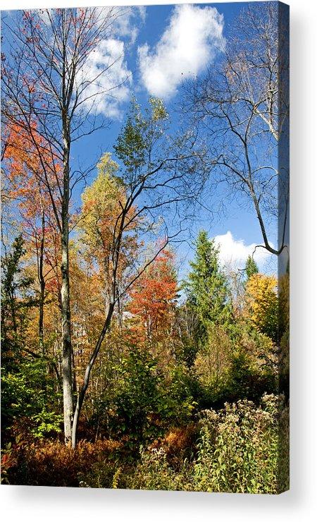 Pennsylvania Acrylic Print featuring the photograph Forest Edge Autumn Pocono Mountains Pennsylvania by A Gurmankin