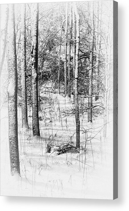 Antique Acrylic Print featuring the photograph Forest In Winter by Tom Mc Nemar