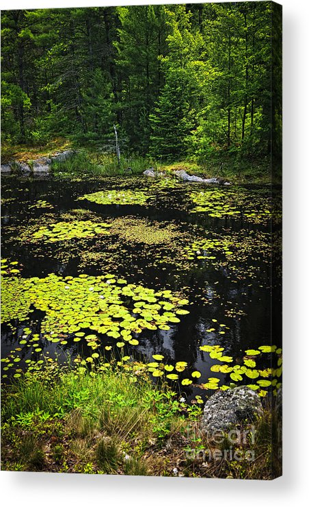 Lake Acrylic Print featuring the photograph Forest Lake With Lily Pads by Elena Elisseeva
