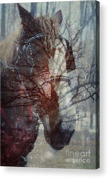 Horse Acrylic Print featuring the photograph Ghost Horse by Nancy TeWinkel Lauren