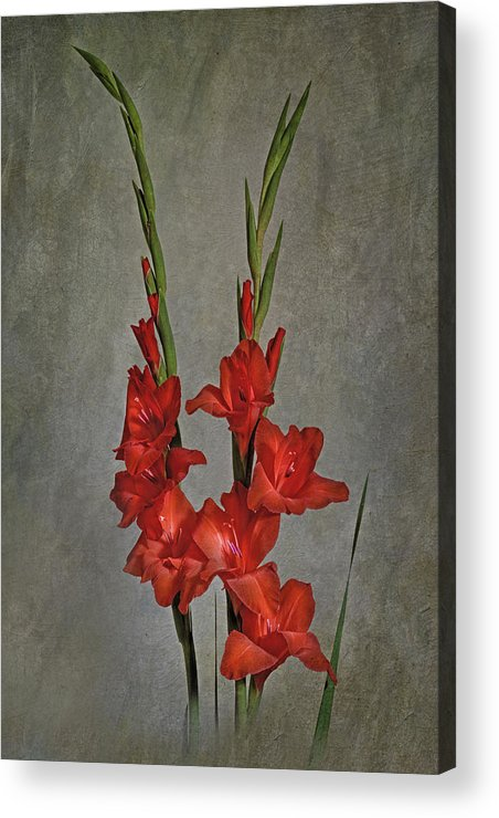 Gladiolus Acrylic Print featuring the photograph Gladiolus I by Richard Macquade