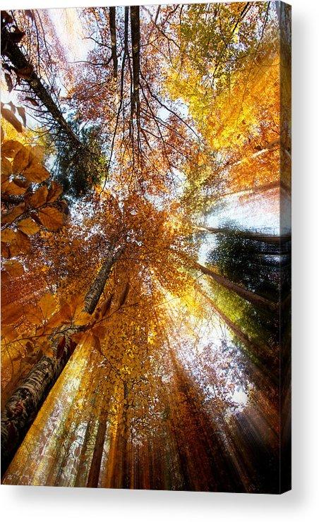 Autumn Acrylic Print featuring the photograph Golden Rays by Ivan Vukelic