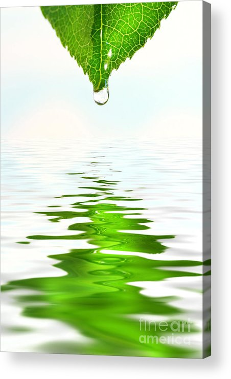 Background Acrylic Print featuring the photograph Green Leaf Over Water Reflection by Sandra Cunningham