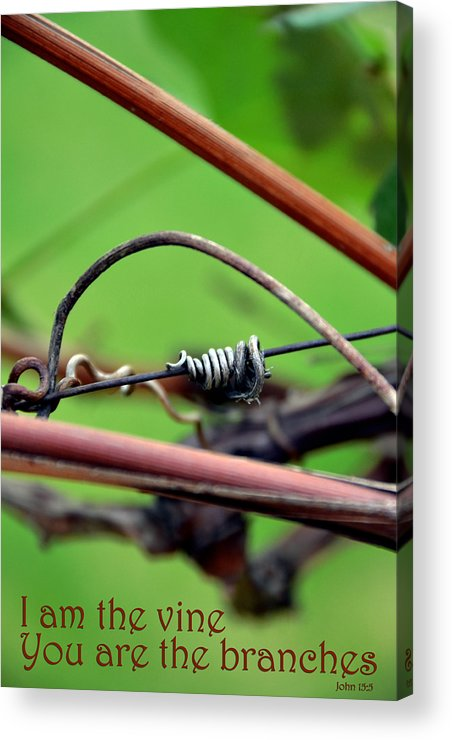 Scripture Acrylic Print featuring the photograph I Am The Vine by Angelina Vick