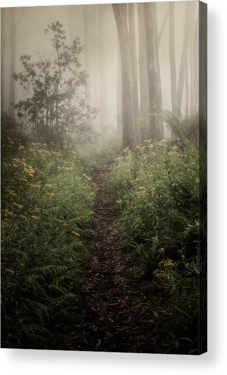 Fog Acrylic Print featuring the photograph In Silence by Amy Weiss