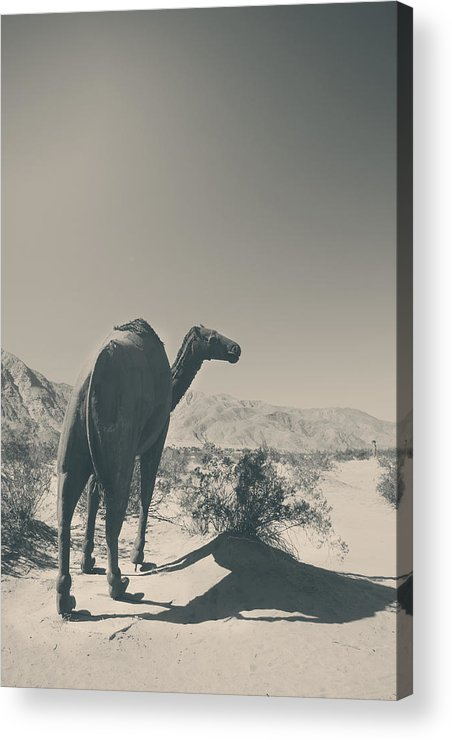 Borrego Springs Acrylic Print featuring the photograph In The Hot Desert Sun by Laurie Search