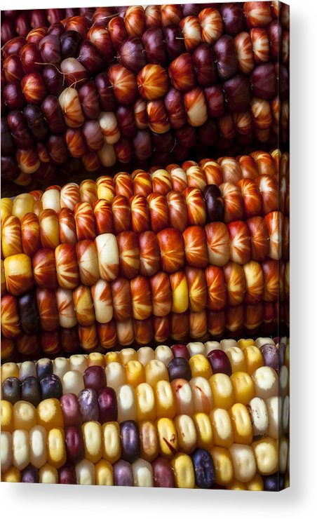 Indian Acrylic Print featuring the photograph Indian Corn Harvest Time by Garry Gay