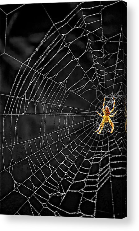 Bugs Acrylic Print featuring the photograph Itsy Bitsy Spider My Ass 3 by Steve Harrington