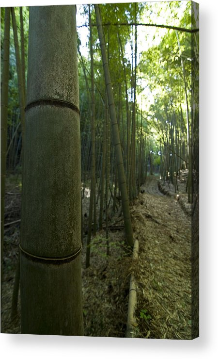 Bamboo Acrylic Print featuring the photograph Kissing Bamboo by Aaron Bedell