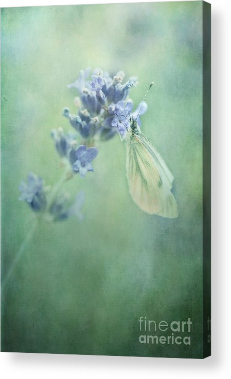Butterfly Acrylic Print featuring the photograph Land Of Milk And Honey by Priska Wettstein