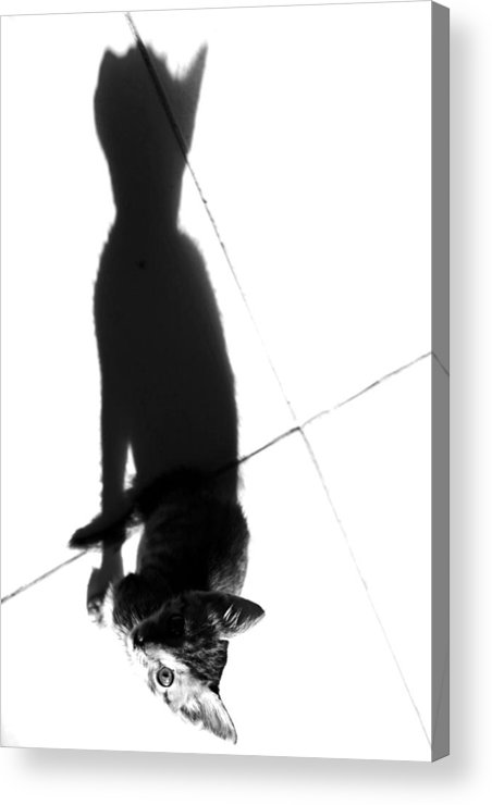 Jezcself Acrylic Print featuring the photograph Large Dreaming by Jez C Self
