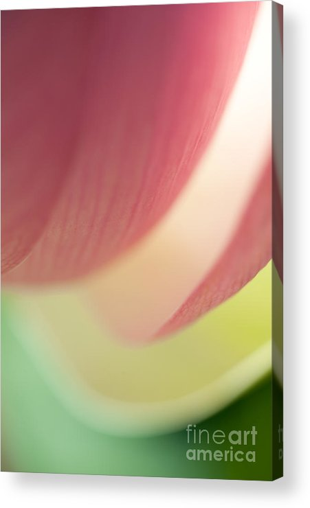 Lotus Acrylic Print featuring the photograph Lotus Abstract 2 by Catherine Lau