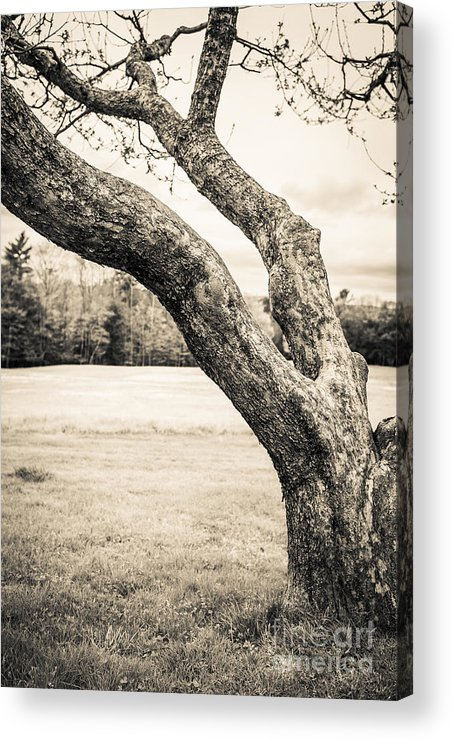 Cornish Acrylic Print featuring the photograph Meet Me Under The Old Apple Tree by Edward Fielding