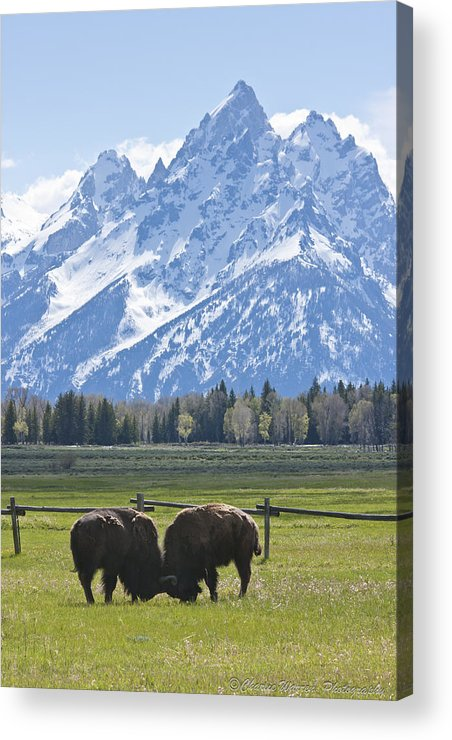 Grand Tetons Acrylic Print featuring the photograph No Butts About It by Charles Warren