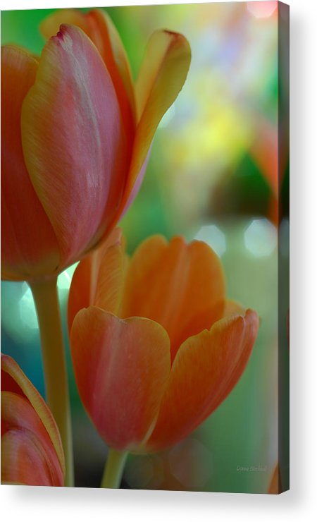 Tulips Acrylic Print featuring the photograph Nothing As Sweet As Your Tulips by Donna Blackhall