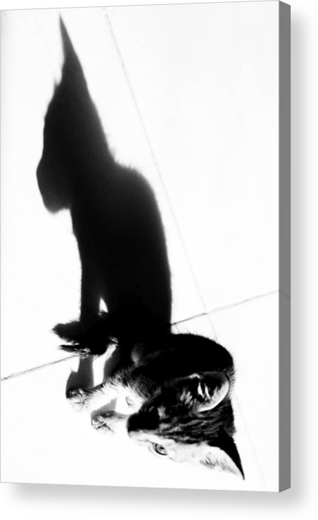 Jezcself Acrylic Print featuring the photograph One Day That Will Be Me by Jez C Self