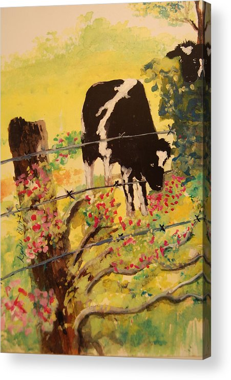 Animal Paintings Acrylic Print featuring the painting Peek A Moo by Lynn Beazley Blair