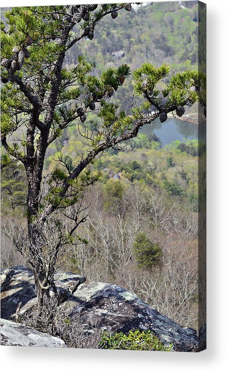 Nature Acrylic Print featuring the photograph Pine Tree On A Mountain by Susan Leggett