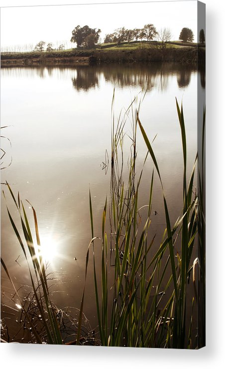 Water Acrylic Print featuring the photograph Pond by Les Cunliffe